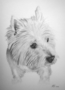 Bleistiftzeichnungen, Tierportraits Hunde, Bleistiftzeichnung Tiere, Tierzeichnungen, Tierzeichner
