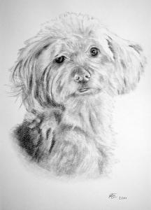 Kohlezeichnungen, Tierportraits Hunde, Kohlezeichnung, Tierzeichnungen, Hunde Zeichner Kohle & Bleistift