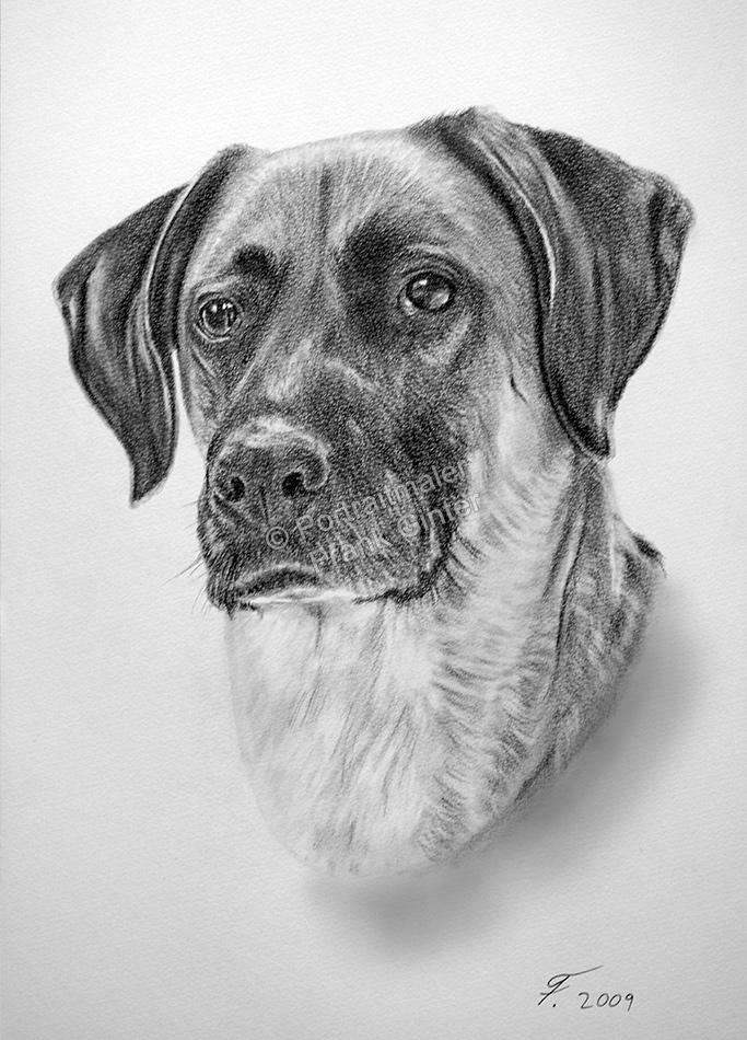 Kohlezeichnungen, Tierportraits Hunde, Kohlezeichnung, Tierzeichnungen, Hunde Zeichner Kohle