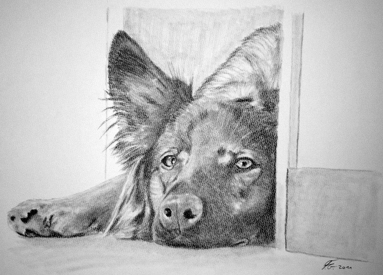Bleistiftzeichnung vom Schäferhund, Tierzeichnungen, Bleistiftzeichnungen Tierportraits, Hundezeichnung Bleistift