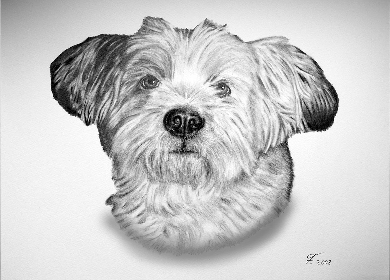 Kohlezeichnung vom Hund, Tierzeichnungen, Kohlezeichnungen, Tierportraits mit Kohlestift