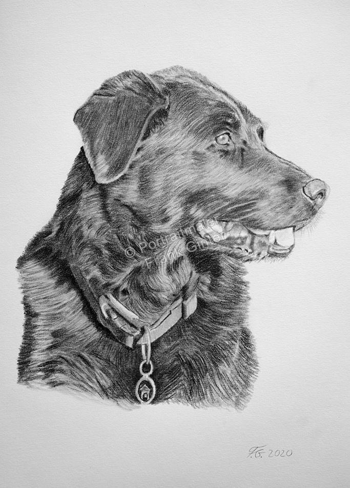 Zeichnungen mit Hunden, Tierzeichnungen, Hundezeichnungen vom Foto, Tierportraits mit Bleistift und Kohle, Hundebilder handgemacht