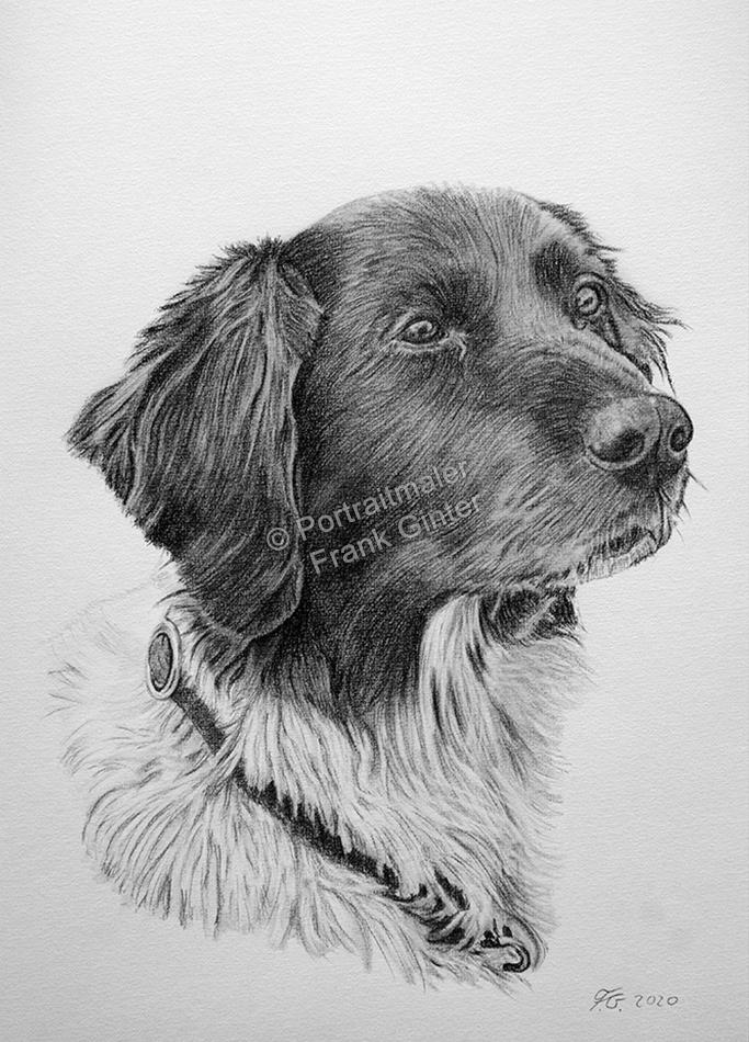 Kohle-Zeichnungen, Tierportraits Hunde, Kohlezeichnung, Zeichnungen Tiere, Hundezeichnung, Tierzeichner Hunde