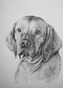 Zeichnungen, Tierportraits Hunde, Bleistiftzeichnung, Tierzeichnungen, Hundebilder Zeichner Bleistifte