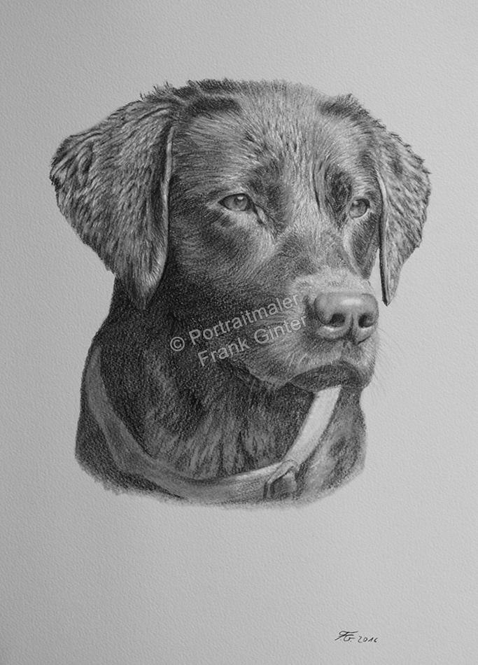 Bleistiftzeichnung vom Hund, Tierzeichnungen, Bleistiftzeichnungen Tierportraits, Hundezeichnung Bleistift