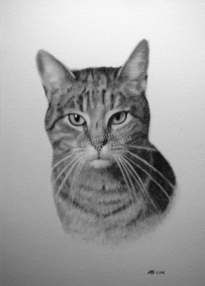 Bleistiftzeichnung einer Katze, Tierzeichnungen, Bleistiftzeichnungen Tierportraits, Katzenzeichnung Bleistift