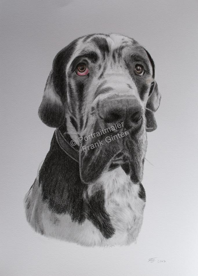 Handgemalte Bilder, Tiermalerei, Bilder malen lassen, Tiermaler, Hunde, Tierportraits, Hundeportrait, Hundezeichnung