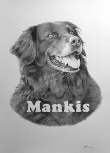 Bleistiftzeichnungen, Kohlezeichnungen, Tierportraits Hunde, Tierzeichnungen, Hund Zeichner Bleistift Kohle