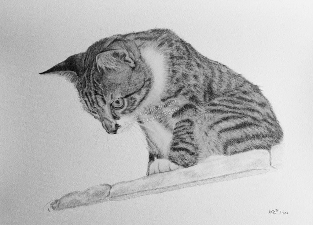 Bleistiftzeichnung Katzenportrait, Tierzeichnungen, Bleistiftzeichnung, Tierportraits mit Bleistift und Kohle
