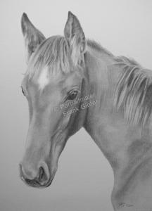 Bleistiftzeichnung, Tierportraits Pferde, Bleistiftzeichnungen, Tierzeichnungen, Pferdeportraits in Kohle und Bleistift