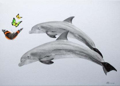 Bleistiftzeichnungen, Tierportraits, Delphine mit Bleistift, Tierzeichnungen Tierportraits, Delphine mit Schmetterlingen als Buntstiftzeichnung