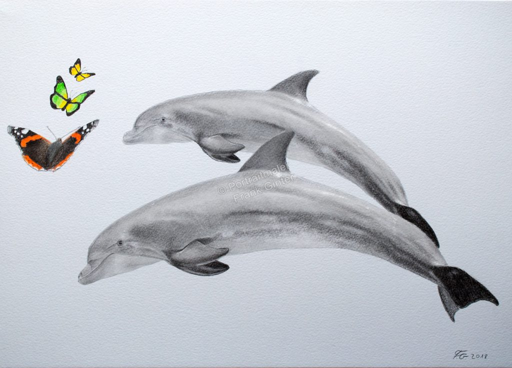 Delphine-Portrait, Buntstiftzeichnungen Delphine mit Schmetterlingen, Tierportraits, Bleistiftzeichnungen