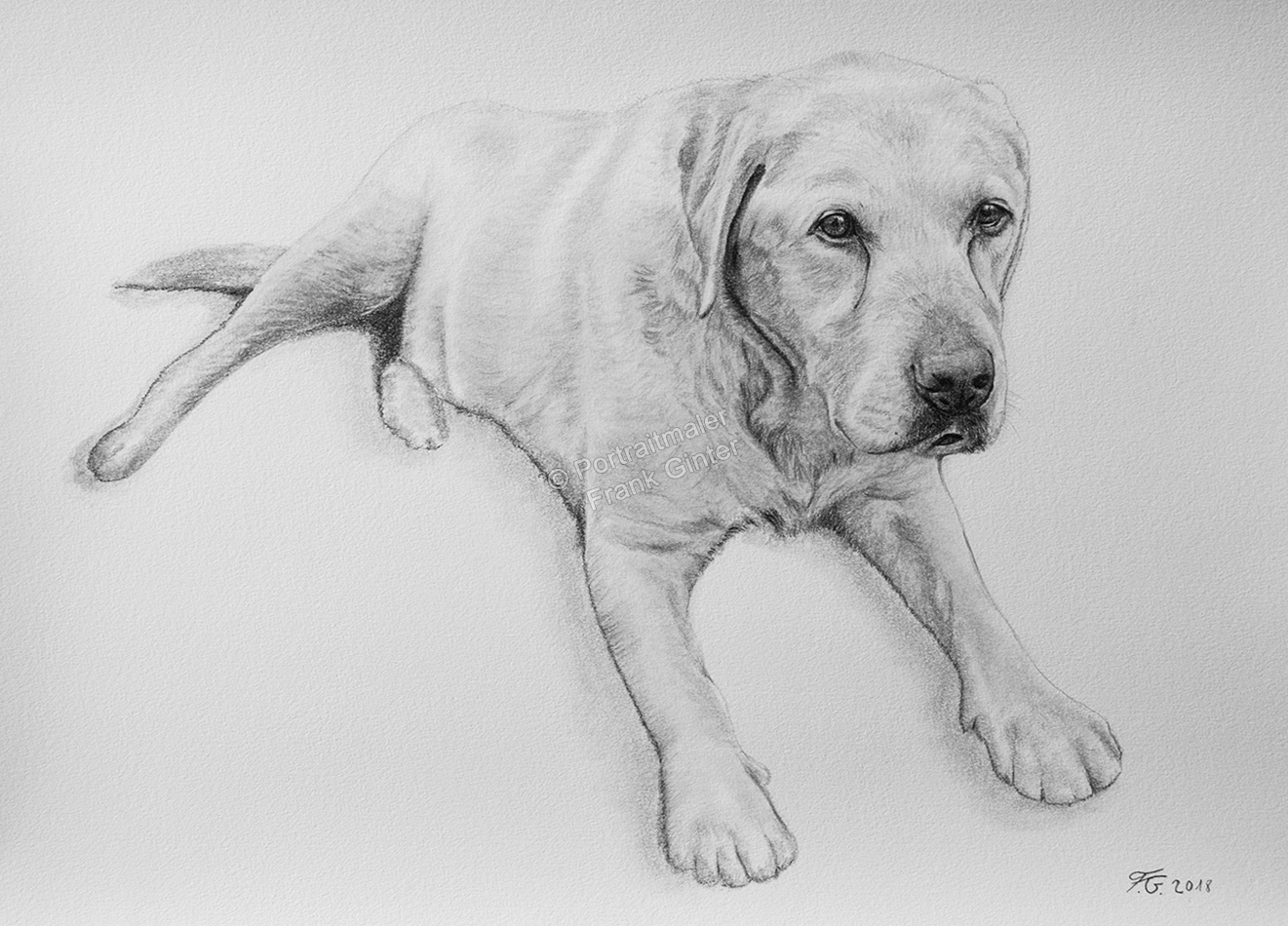 Bleistiftzeichnung vom Hund, Tierzeichnungen, Bleistiftzeichnungen Tierportraits, Hundezeichnungen Bleistift