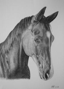 Bleistiftzeichnung vom Pferde, Pferdezeichnungen, Bleistiftzeichnungen, Pferdezeichnung, Pferdeportraits