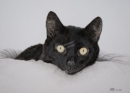 Farbstiftzeichnung einer Katze, Tierzeichnungen, Farbstiftzeichnungen Tierportraits, Katzenzeichnung Farbstift