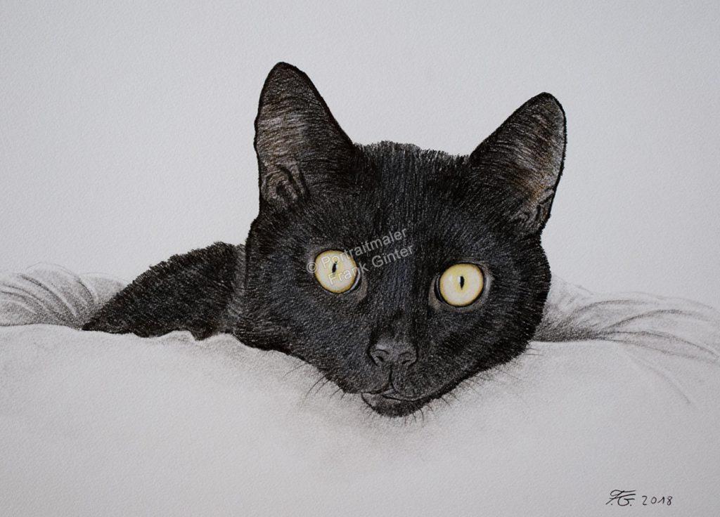 Farbstiftzeichnung vom Katzen, Tierzeichnungen, Farbstiftzeichnungen Tierportraits Farbstift