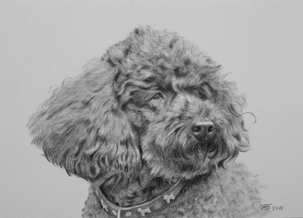 Bleistiftzeichnung vom Hund, Tierzeichnungen, Bleistiftzeichnungen, Tierportraits mit Bleistift