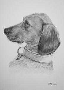 Bleistiftzeichnung eines Hundes, Tierzeichnungen, Bleistiftzeichnungen, Tierportraits, Hunde-Portraits andgezeichnet