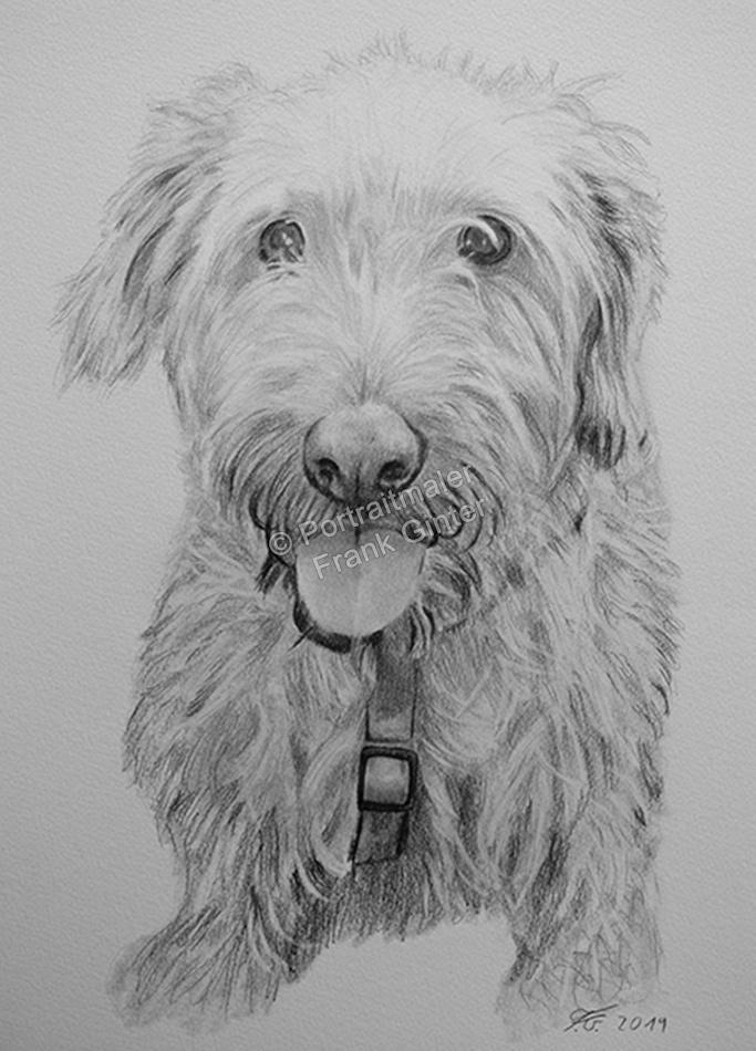 Bleistiftzeichnungen von Hunden, Tierzeichnungen, Bleistiftzeichnungen, Tierportraits, Hundeportraits handgezeichnet