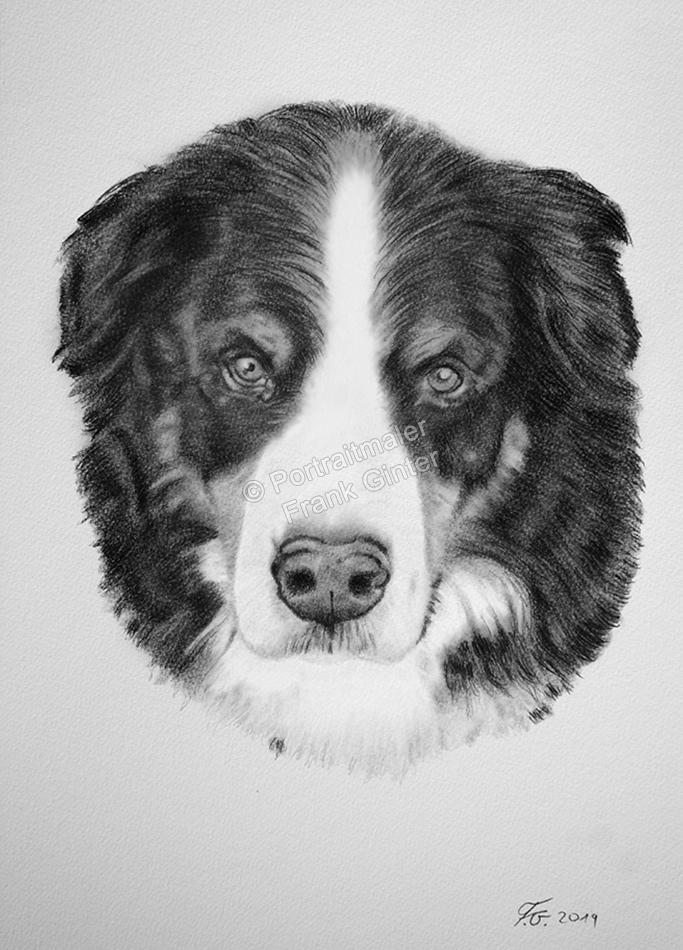 Kohlezeichnungen, Tierportraits Hunde, Kohlezeichnung, Tierzeichnungen, Hunde mit Kohle gezeichnet, Tierzeichner