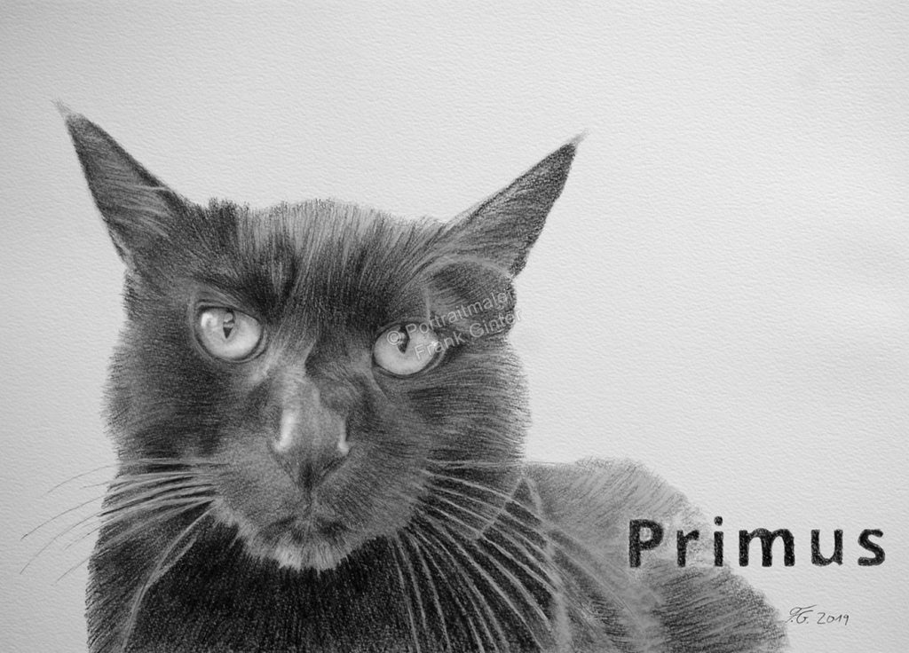 Bleistiftzeichnungen, Tierportraits Katzen, Bleistiftzeichnung, Tierzeichnungen, Katze in Kohle und Bleistift