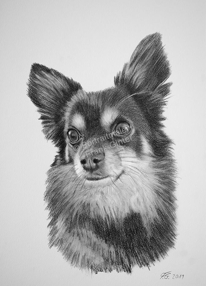 Kohlezeichnungen, Bleistift Tierportraits Hunde, Kohlezeichnung, Tierzeichnungen, Hunde in Kohle und Bleistiften, Tierzeichner