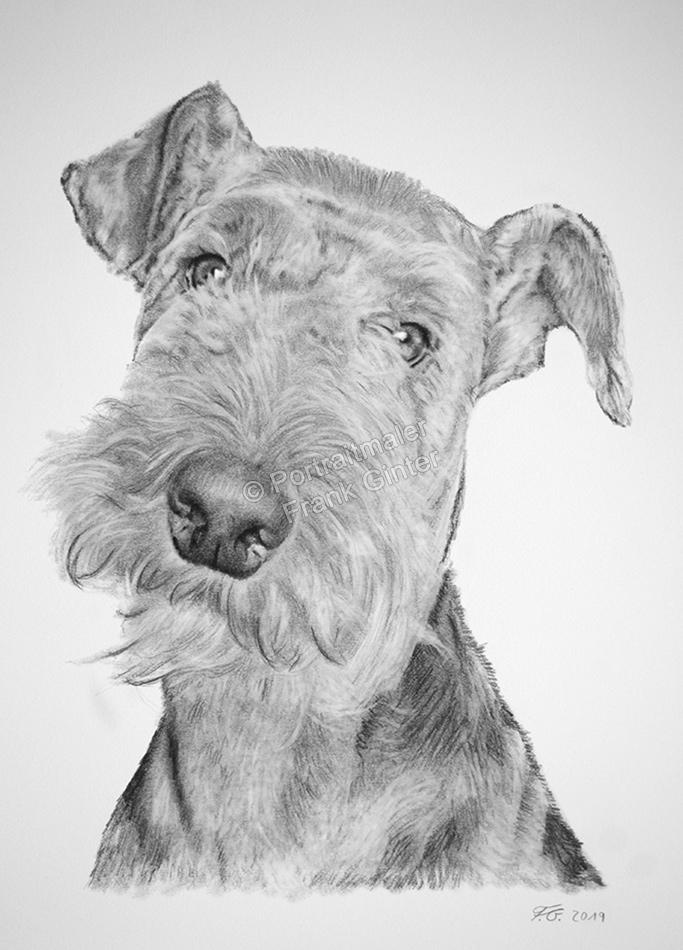 Kohlezeichnungen mit Hunden, Bleistift Tierzeichnungen, Hundezeichnungen, Tierportraits mit Bleistiften und Kohle, Hunde