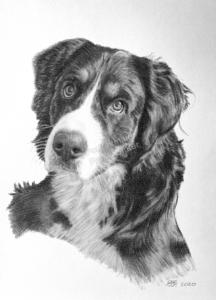 Gezeichnete Porträts mit Hunden als Kohlezeichnungen bestellen