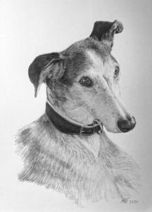 Hundeporträt handgezeichnet mit Bleistiften