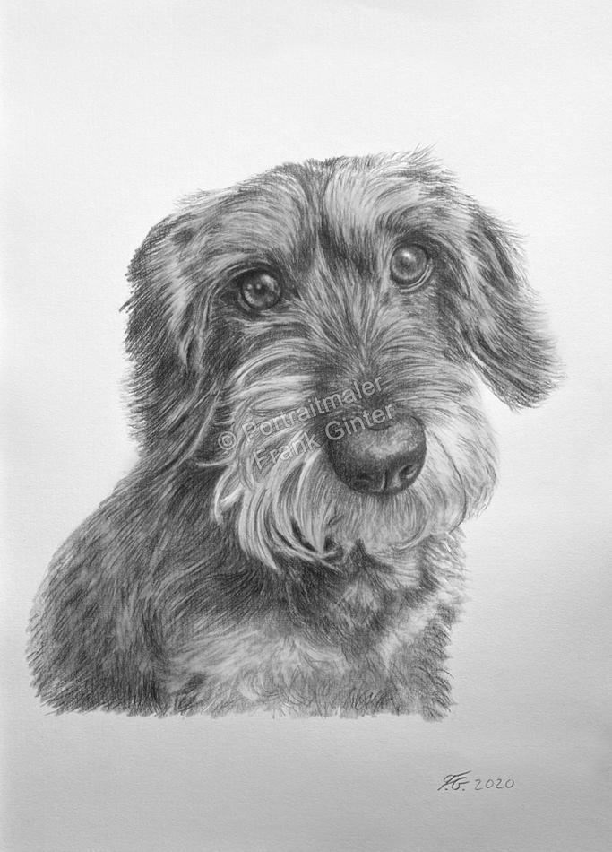 Porträtzeichnung ein Hund mit Bleistift