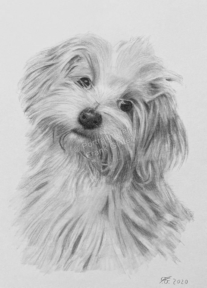 Hundebilder als Kohlezeichnungen